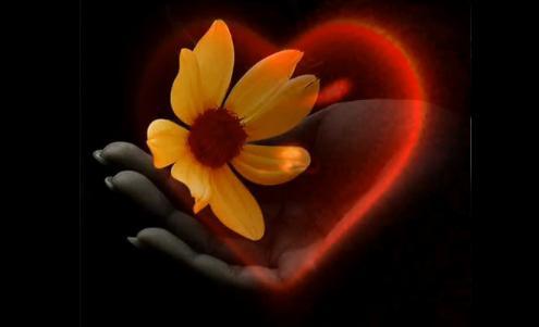 Srce u slikama - Page 2 Srce-na-dlanu
